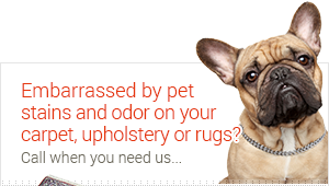 pet stain & odor treatment